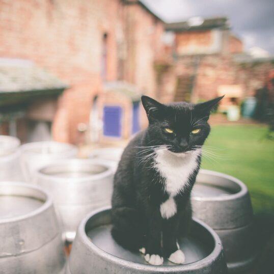 Tirril Cat